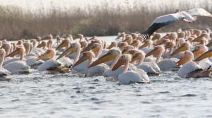 Cum ne deplasam in Delta Dunarii cu salupa in 2015
